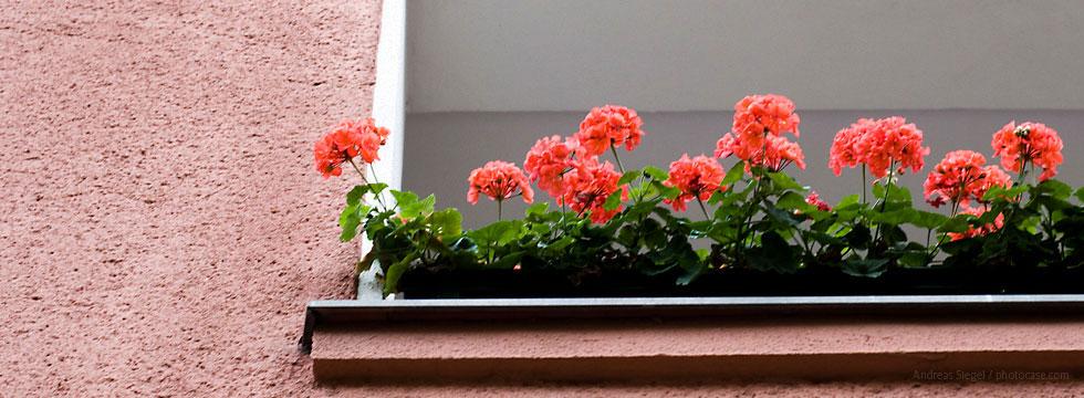 Häuserfront in Weidenpesch